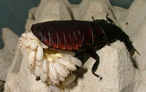 תיקן מדגסקר