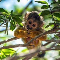 יער הקופים יודפת
